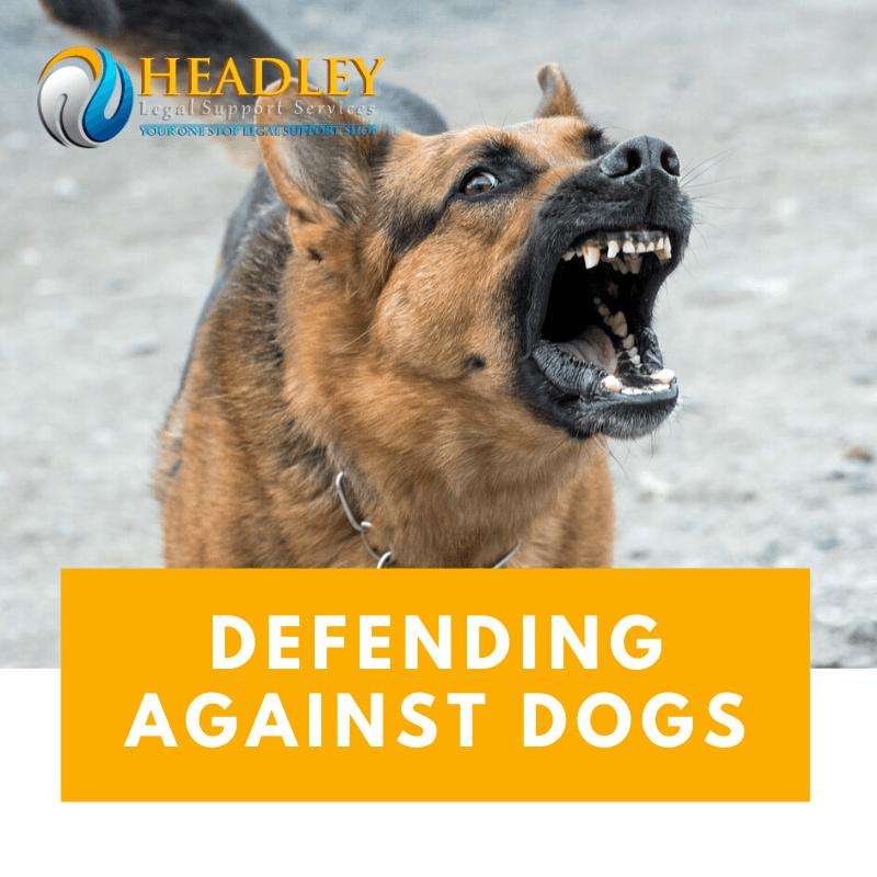 dog bite, dog angry, rabid, dog,headley legal support